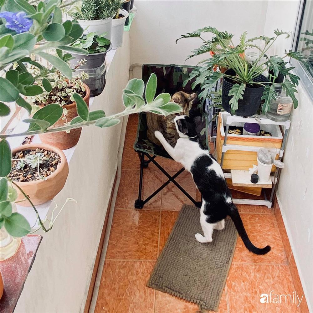 Nghỉ ở nhà dài ngày, chàng trai Sài Gòn biến ban công 4m² nhàm chán thành khu vườn xanh mướt đủ loại cây-9