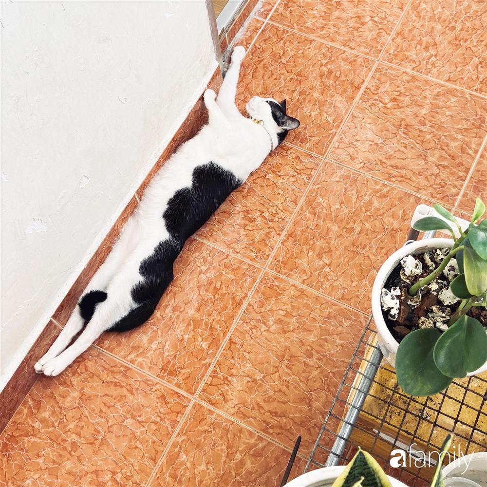 Nghỉ ở nhà dài ngày, chàng trai Sài Gòn biến ban công 4m² nhàm chán thành khu vườn xanh mướt đủ loại cây-12