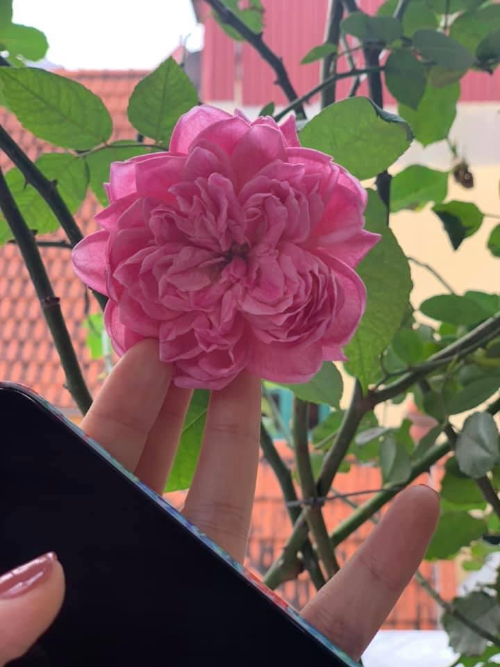 Khu vườn ngập hoa quả và rau xanh tại biệt thự của Hoa hậu Nguyễn Thị Huyền-5