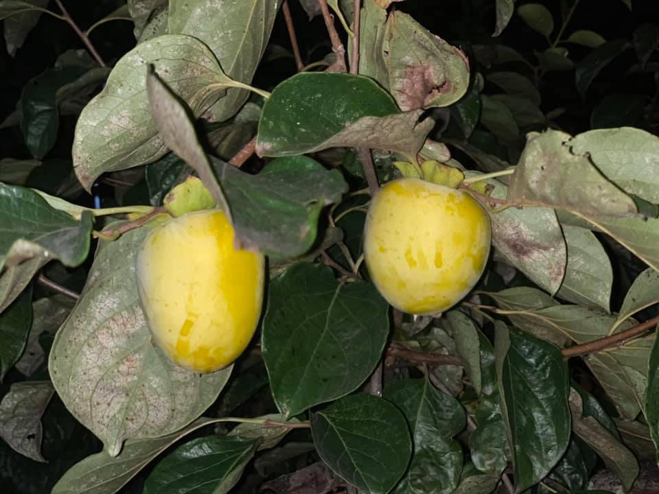 Khu vườn ngập hoa quả và rau xanh tại biệt thự của Hoa hậu Nguyễn Thị Huyền-18