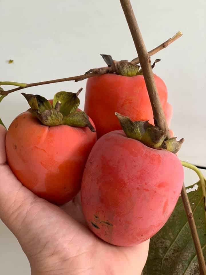 Khu vườn ngập hoa quả và rau xanh tại biệt thự của Hoa hậu Nguyễn Thị Huyền-19