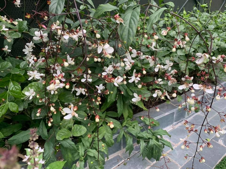 Khu vườn ngập hoa quả và rau xanh tại biệt thự của Hoa hậu Nguyễn Thị Huyền-21