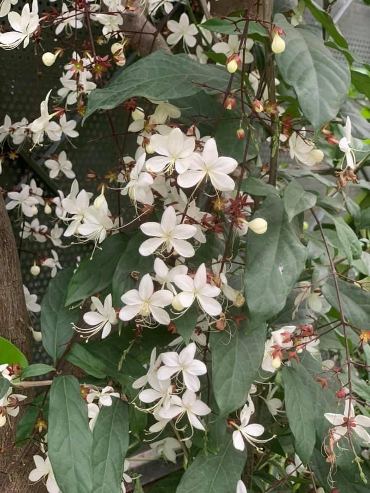 Khu vườn ngập hoa quả và rau xanh tại biệt thự của Hoa hậu Nguyễn Thị Huyền-22