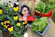 Khu vườn ngập hoa quả và rau xanh tại biệt thự của Hoa hậu Nguyễn Thị Huyền