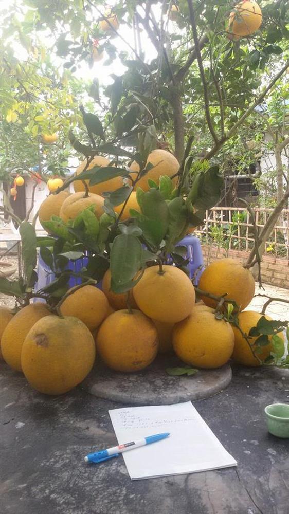 Nhà vườn 10.000m2 của nghệ sĩ Giang còi ngập hoa và trái cây-2