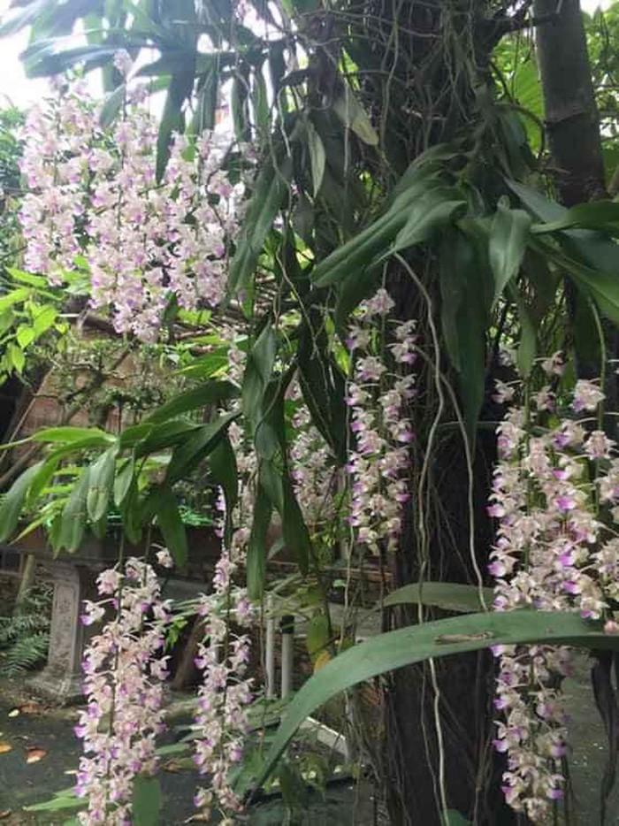 Nhà vườn 10.000m2 của nghệ sĩ Giang còi ngập hoa và trái cây-14