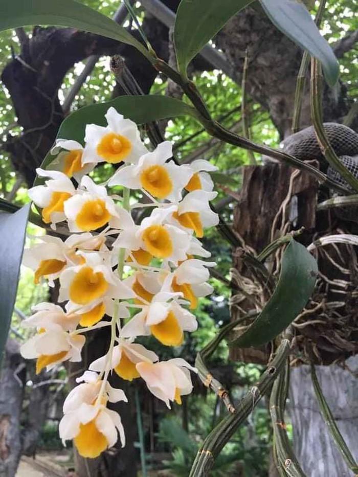 Nhà vườn 10.000m2 của nghệ sĩ Giang còi ngập hoa và trái cây-15