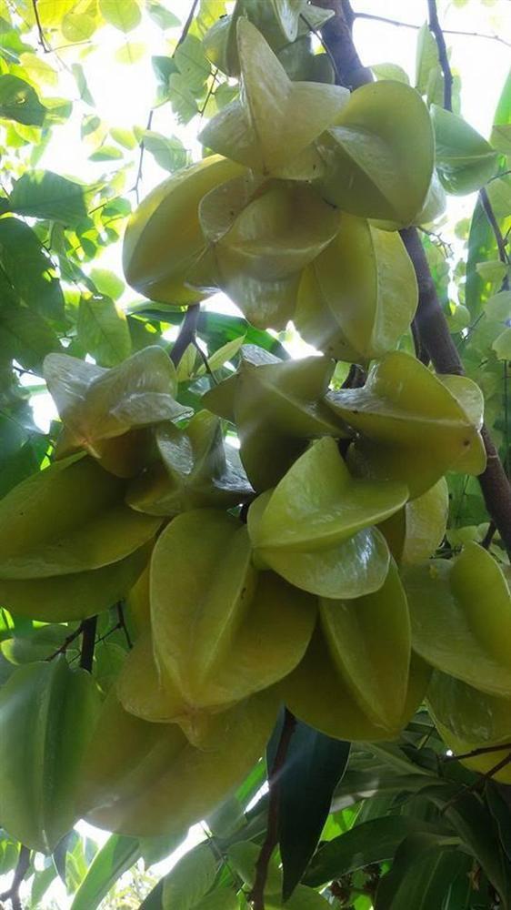 Nhà vườn 10.000m2 của nghệ sĩ Giang còi ngập hoa và trái cây-28