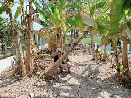 Showbiz đóng băng, Minh Luân bỏ phố về quê cải tạo nhà vườn rộng 3.000m2-2