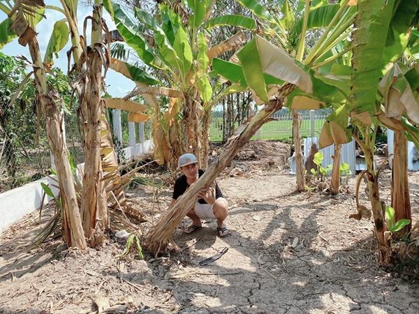 Quyền Linhvà nhiều sao Việt chăm vườn trái cây khi về quê-3