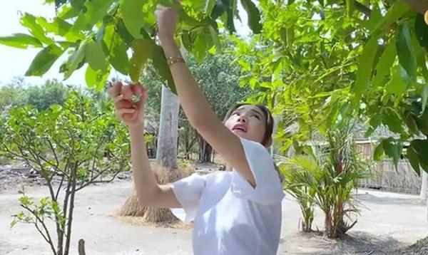 Quyền Linhvà nhiều sao Việt chăm vườn trái cây khi về quê-10