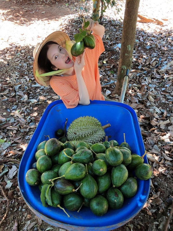 Quyền Linhvà nhiều sao Việt chăm vườn trái cây khi về quê-12