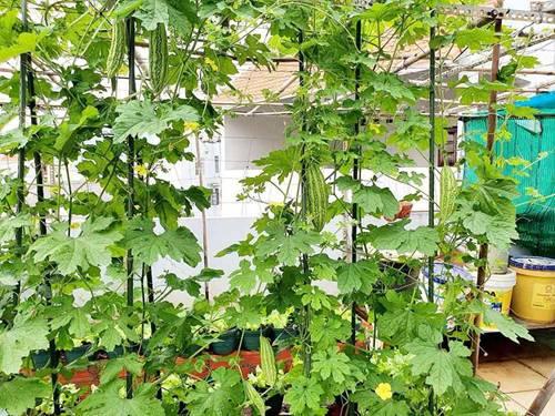 Mướt mắt vườn rau sạch tự cung tự cấp trong mùa dịch của mẹ đảm Vũng Tàu-2