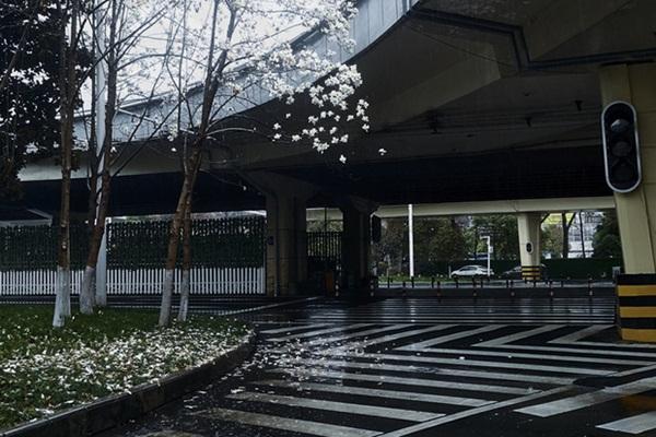 Nhật ký một gia đình có người bị ung thư trong những ngày phong tỏa ở Vũ Hán: Tê liệt, hoảng sợ tưởng không thể gượng dậy được-8