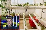 Ngắm vườn rau và nấm sạch do chính tay MC Đại Nghĩa tự trồng trên sân thượng nhà mình ở quận 7, TP HCM-15