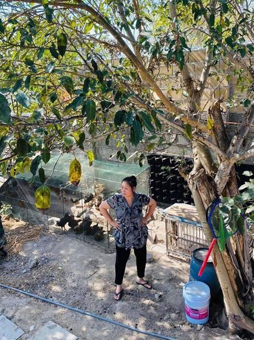 Sao Việt khoe vườn: NSND Hồng Vân nuôi gà, Quốc Thuận có nhà xum xuê cây-4