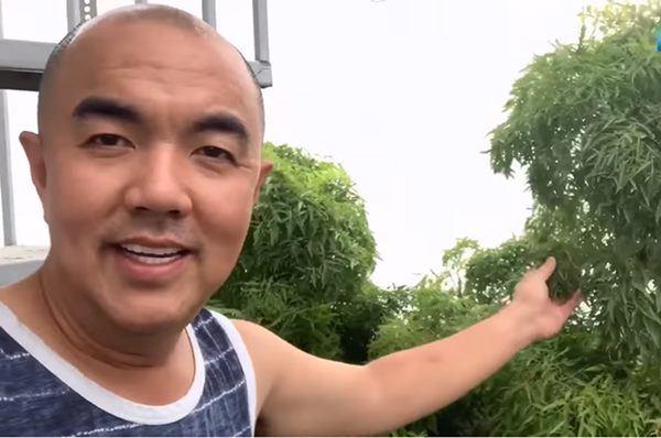 Sao Việt khoe vườn: NSND Hồng Vân nuôi gà, Quốc Thuận có nhà xum xuê cây-5