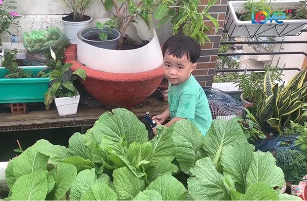 Sao Việt khoe vườn: NSND Hồng Vân nuôi gà, Quốc Thuận có nhà xum xuê cây-7