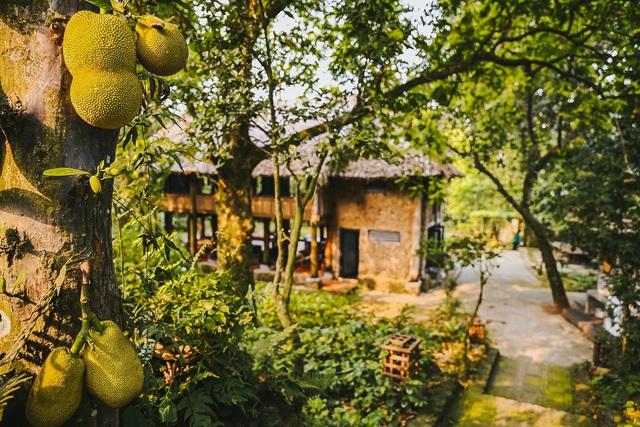Ngôi nhà trong mơ trên đỉnh núi gần Hà Nội: Cá đầy ao, vườn đầy hoa trái-4