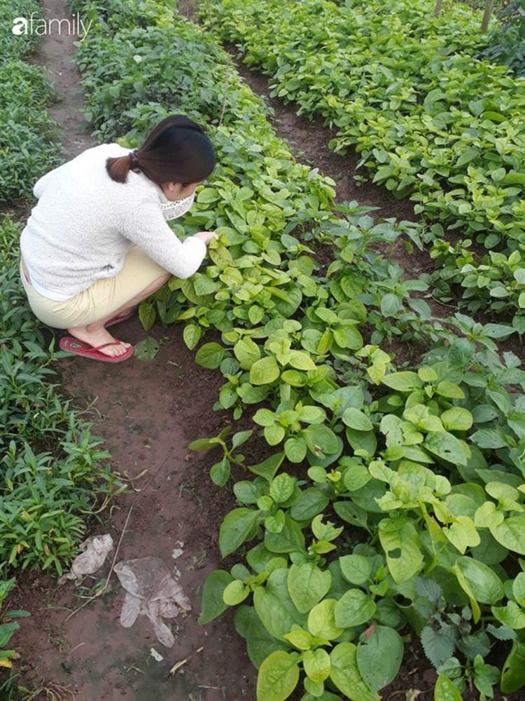 Nhờ tính toán thuê đất trồng rau, nuôi gà trên sân thượng mà mẹ đảm Hà Nội một tháng đi chợ 2 lần, tiền chợ tiêu không quá 1,5 triệu đồng/tháng cho gia đình 5 người-6