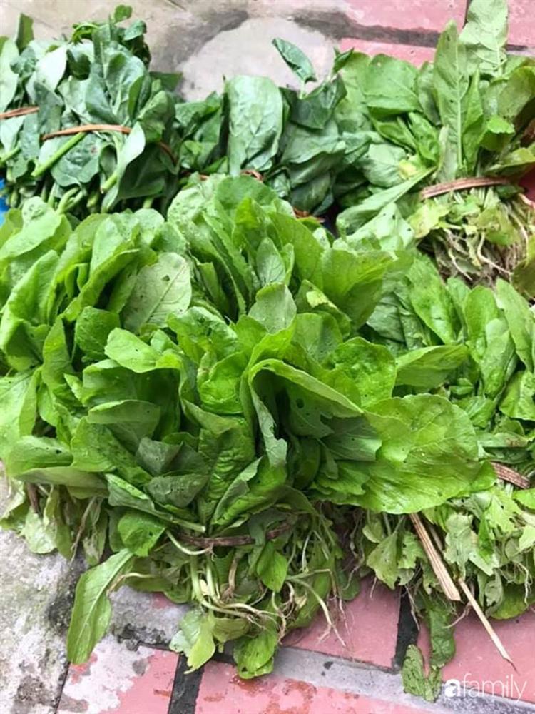 Nhờ tính toán thuê đất trồng rau, nuôi gà trên sân thượng mà mẹ đảm Hà Nội một tháng đi chợ 2 lần, tiền chợ tiêu không quá 1,5 triệu đồng/tháng cho gia đình 5 người-8
