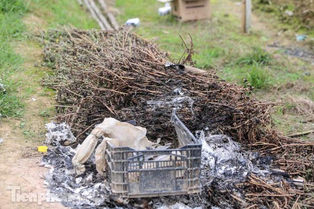 Không có nơi tiêu thụ, người nông dân khóc ròng, cắt hoa vứt đầy đường-6