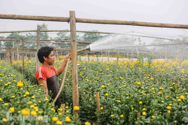 Không có nơi tiêu thụ, người nông dân khóc ròng, cắt hoa vứt đầy đường-10