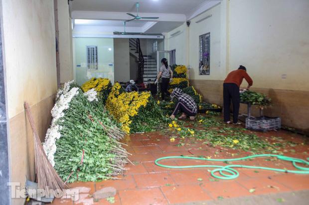 Không có nơi tiêu thụ, người nông dân khóc ròng, cắt hoa vứt đầy đường-17