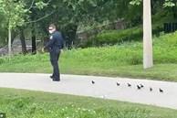 Cảnh sát lần lượt dẫn 2 đàn vịt con đi tìm mẹ quanh công viên, dân mạng hài hước bình luận: 'Không tìm được mẹ thì cả đàn cũng có bố rồi!'