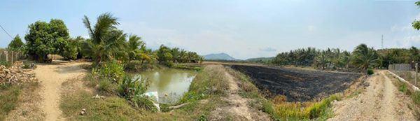 Đã mắt với vườn xoài 150 gốc của ca sĩ Minh Chuyên tại Nha Trang, đều tăm tắp 1kg/quả-2
