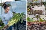 Người đàn ông đang sở hữu góc vườn đẹp hút hồn ở Hà Nội chia sẻ kinh nghiệm trồng cây để có khu vườn đẹp như châu Âu-37