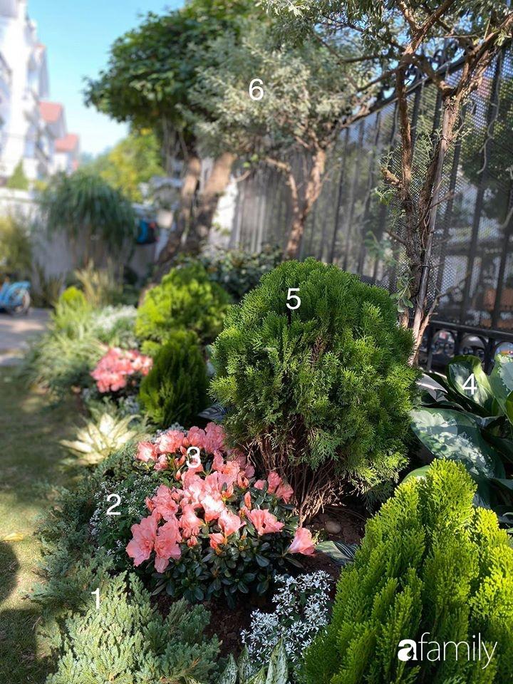Người đàn ông đang sở hữu góc vườn đẹp hút hồn ở Hà Nội chia sẻ kinh nghiệm trồng cây để có khu vườn đẹp như châu Âu-12