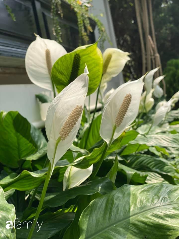 Người đàn ông đang sở hữu góc vườn đẹp hút hồn ở Hà Nội chia sẻ kinh nghiệm trồng cây để có khu vườn đẹp như châu Âu-16
