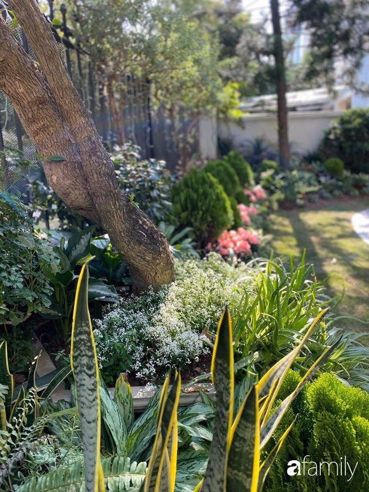 Người đàn ông đang sở hữu góc vườn đẹp hút hồn ở Hà Nội chia sẻ kinh nghiệm trồng cây để có khu vườn đẹp như châu Âu-18