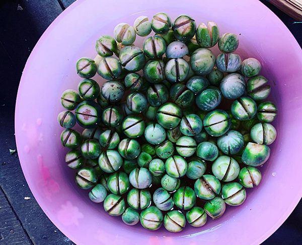 HHen Niê lên rẫy thu hoạch rau trái, từ cà pháo tới loại quả tuổi thơ ít người nhớ-4