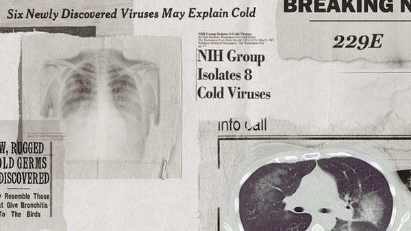 Lịch sử bí ẩn của họ virus corona: Từ cơn cảm lạnh thông thường đến những đại dịch toàn cầu-1