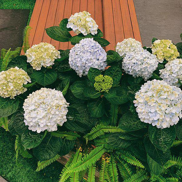 Á hậu Tú Anh khoe ban công nhà ngập hoa, còn từng tự trồng rau cho con ăn dặm-4