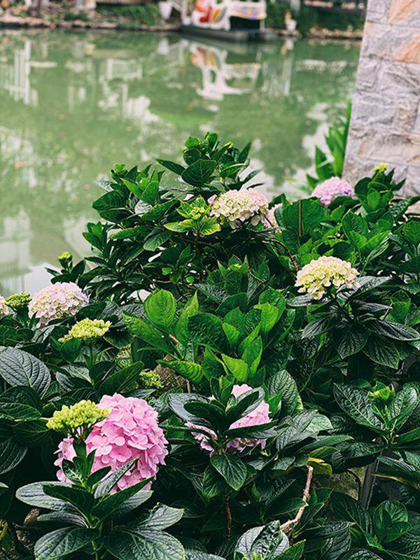 Á hậu Tú Anh khoe ban công nhà ngập hoa, còn từng tự trồng rau cho con ăn dặm-5
