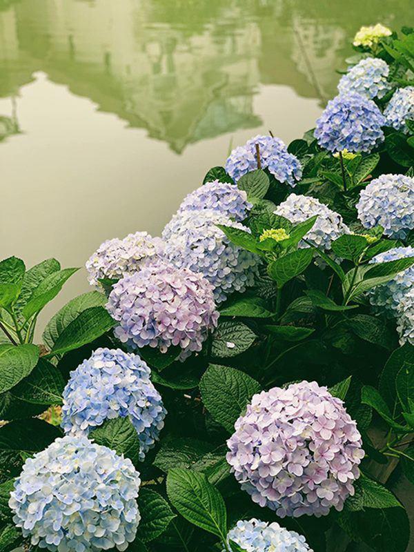 Á hậu Tú Anh khoe ban công nhà ngập hoa, còn từng tự trồng rau cho con ăn dặm-6