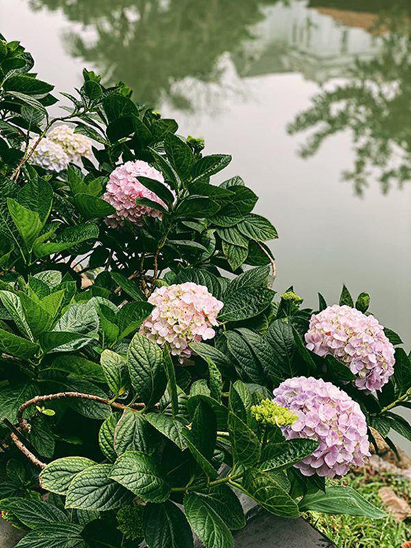 Á hậu Tú Anh khoe ban công nhà ngập hoa, còn từng tự trồng rau cho con ăn dặm-7
