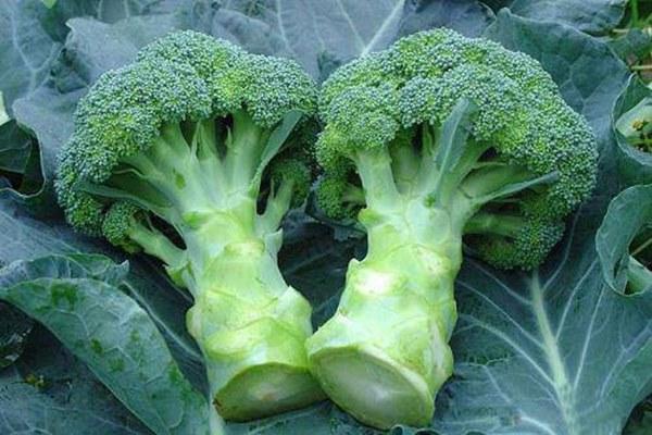 Thực phẩm có tác dụng thải độc cơ thể ai cũng nên biết-2