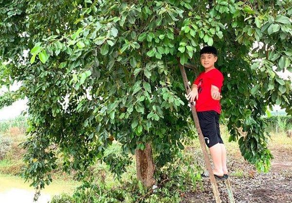 Nghỉ dịch dài ngày, Lê Phương dẫn cả gia đình về Tây Ninh trồng cây, hái quả-1