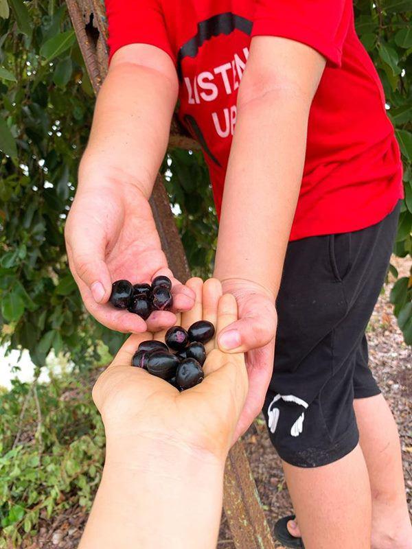 Nghỉ dịch dài ngày, Lê Phương dẫn cả gia đình về Tây Ninh trồng cây, hái quả-2
