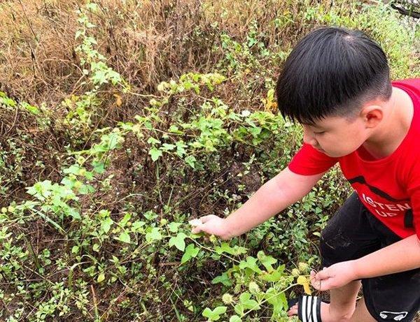 Nghỉ dịch dài ngày, Lê Phương dẫn cả gia đình về Tây Ninh trồng cây, hái quả-5