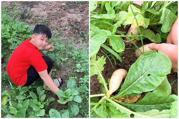 Nghỉ dịch dài ngày, Lê Phương dẫn cả gia đình về Tây Ninh trồng cây, hái quả-7