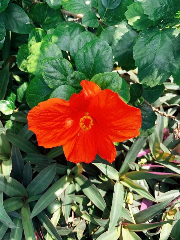 Khu vườn ngập tràn hoa và cây xanh trong căn villa trên không trị giá hơn 70 tỷ đồng của Nathan Lee-4