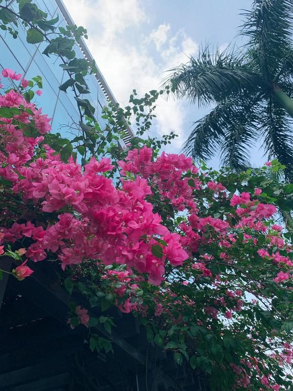 Khu vườn ngập tràn hoa và cây xanh trong căn villa trên không trị giá hơn 70 tỷ đồng của Nathan Lee-7