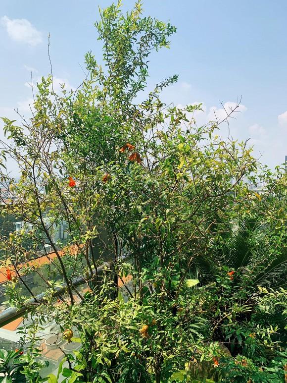 Khu vườn ngập tràn hoa và cây xanh trong căn villa trên không trị giá hơn 70 tỷ đồng của Nathan Lee-10