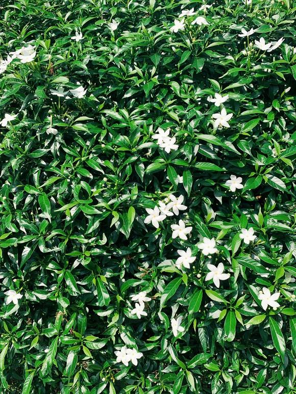 Khu vườn ngập tràn hoa và cây xanh trong căn villa trên không trị giá hơn 70 tỷ đồng của Nathan Lee-11