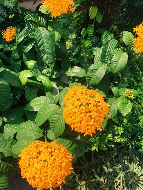 Khu vườn ngập tràn hoa và cây xanh trong căn villa trên không trị giá hơn 70 tỷ đồng của Nathan Lee-12